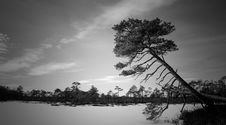 Free Grayscale Photo Of Trees Near Body Of Water Stock Photos - 113036153