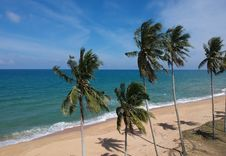 Free Photo Of Coconut Trees On Beach Stock Photo - 113036160