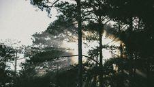 Free Photo Of Tress At Sunrise Royalty Free Stock Photography - 113036207