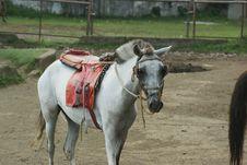 Free Horse, Horse Like Mammal, Horse Tack, Rein Royalty Free Stock Photography - 113057707