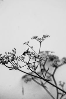 Free Branch, Black And White, Monochrome Photography, Twig Stock Photos - 113058393