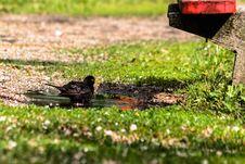 Free Bird, Leaf, Fauna, Grass Stock Image - 113058591