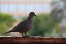 Free Bird, Beak, Fauna, Pigeons And Doves Royalty Free Stock Photos - 113058658