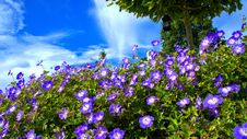 Free Flower, Blue, Plant, Flora Royalty Free Stock Photos - 113058828