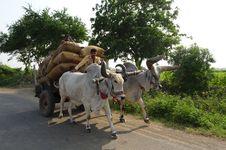 Free Mode Of Transport, Cattle Like Mammal, Vehicle, Ox Stock Photography - 113059362