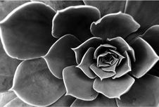 Free White, Black, Black And White, Monochrome Photography Royalty Free Stock Photos - 113059518