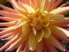 Free Flower, Yellow, Plant, Flowering Plant Stock Photos - 113060003