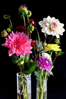 Free Flower, Flowering Plant, Cut Flowers, Plant Stock Photography - 113060082