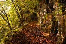 Free Nature, Woodland, Vegetation, Forest Stock Photos - 113060313