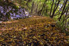 Free Leaf, Woodland, Vegetation, Deciduous Stock Photography - 113060452