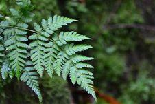 Free Vegetation, Fern, Ferns And Horsetails, Ecosystem Stock Image - 113060931