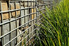 Free Grass, Iron, Plant, Fence Royalty Free Stock Photography - 113060977