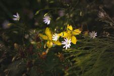 Free Flower, Plant, Flora, Wildflower Stock Photo - 113061150