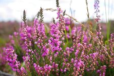 Free Pink, Plant, Flower, Purple Stock Photos - 113061193