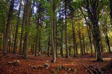 Free Woodland, Nature, Forest, Ecosystem Stock Images - 113061344