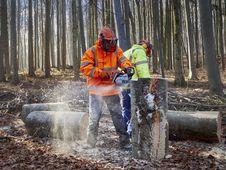 Free Tree, Woodland, Forest, Geological Phenomenon Stock Image - 113061391