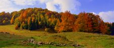 Free Nature, Ecosystem, Temperate Broadleaf And Mixed Forest, Nature Reserve Stock Photos - 113061393