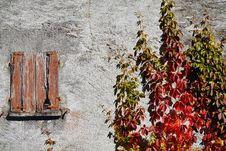 Free Wall, Winter, Tree, Flower Stock Photo - 113061950