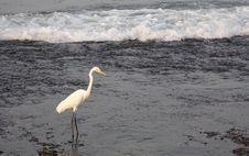 Free Bird, Water, Beak, Egret Royalty Free Stock Image - 113061956