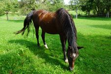 Free Horse, Pasture, Grazing, Grass Royalty Free Stock Photography - 113062277