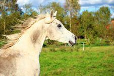 Free Horse, Pasture, Horse Like Mammal, Fauna Stock Image - 113062511