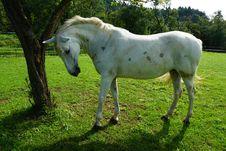 Free Horse, Pasture, Horse Like Mammal, Ecosystem Stock Photos - 113062583