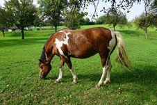Free Horse, Pasture, Grazing, Grass Stock Image - 113062591