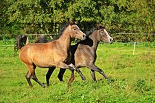 Free Pasture, Horse, Ecosystem, Horse Like Mammal Royalty Free Stock Photography - 113062597