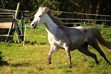 Free Horse, Pasture, Mane, Mare Stock Image - 113062601