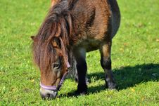 Free Grazing, Pasture, Horse, Grass Royalty Free Stock Image - 113062646