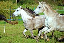 Free Horse, Horse Like Mammal, Pasture, Mare Stock Photos - 113062683
