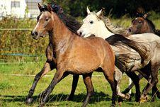 Free Horse, Horse Like Mammal, Mare, Pasture Royalty Free Stock Photography - 113062717