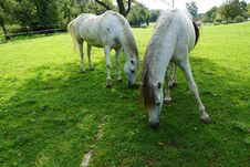 Free Horse, Pasture, Grass, Grazing Royalty Free Stock Photos - 113062718