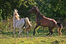 Free Horse, Pasture, Horse Like Mammal, Mare Royalty Free Stock Photos - 113062728