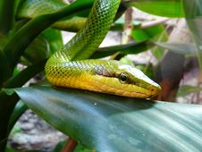 Free Reptile, Scaled Reptile, Snake, Serpent Royalty Free Stock Photography - 113062887