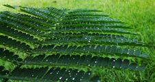 Free Vegetation, Plant, Leaf, Fern Stock Photo - 113063680