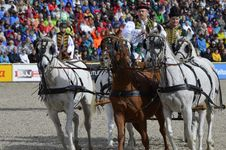 Free Horse Harness, Jockey, Harness Racing, Rein Stock Photography - 113063972