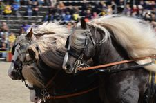 Free Horse Harness, Horse, Rein, Horse Tack Royalty Free Stock Photo - 113064085