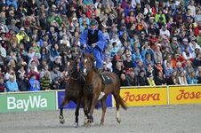 Free Animal Sports, Equestrian, Sport Venue, Horse Royalty Free Stock Images - 113064109