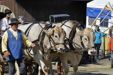 Free Cattle Like Mammal, Vehicle, Ox, Horse Harness Royalty Free Stock Photo - 113064135