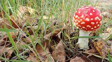 Free Mushroom, Fungus, Agaric, Edible Mushroom Royalty Free Stock Photos - 113064618