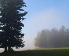 Free Sky, Tree, Mist, Fog Stock Image - 113065081