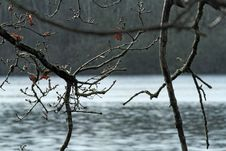 Free Branch, Water, Tree, Twig Stock Image - 113065501