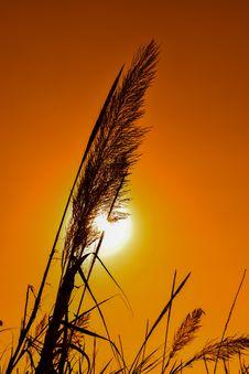 Free Sky, Morning, Sunset, Grass Family Stock Images - 113065994