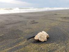 Free Sea, Seashell, Sand, Shore Royalty Free Stock Photos - 113066528