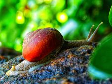 Free Snails And Slugs, Snail, Molluscs, Close Up Stock Photography - 113066802
