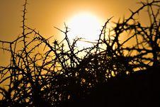 Free Sky, Branch, Sun, Tree Stock Image - 113067701