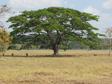 Free Tree, Savanna, Ecosystem, Vegetation Stock Photo - 113067860