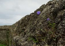 Free Rock, Bedrock, Outcrop, Escarpment Royalty Free Stock Image - 113068796