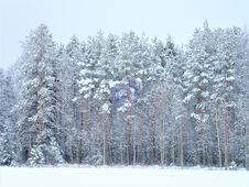 Free Winter, Snow, Tree, Frost Stock Images - 113069494